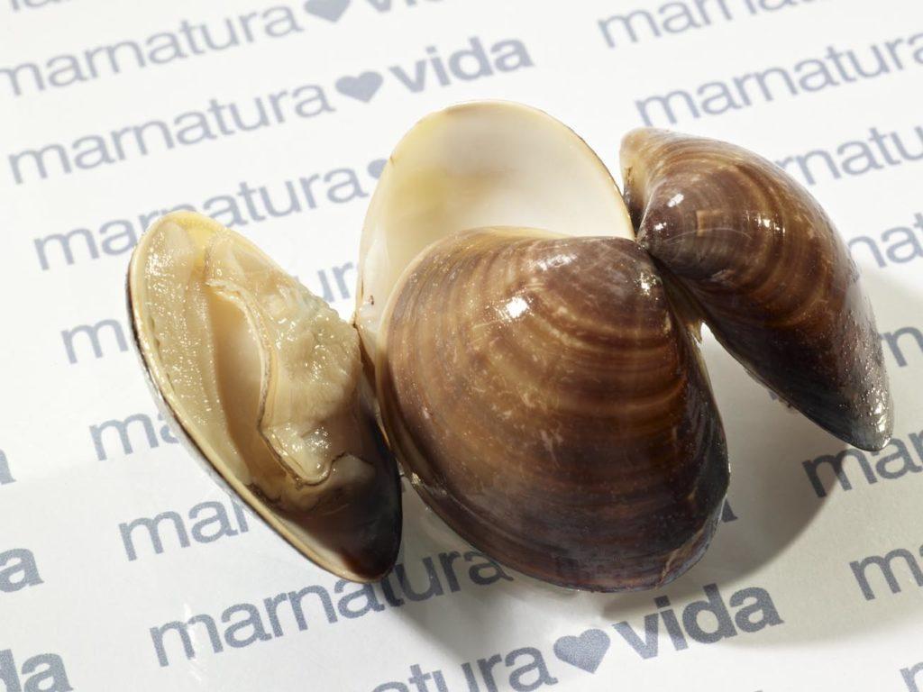 almeja tailandia congelada frozen thailand clams